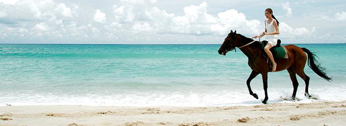 hotel horse photography
